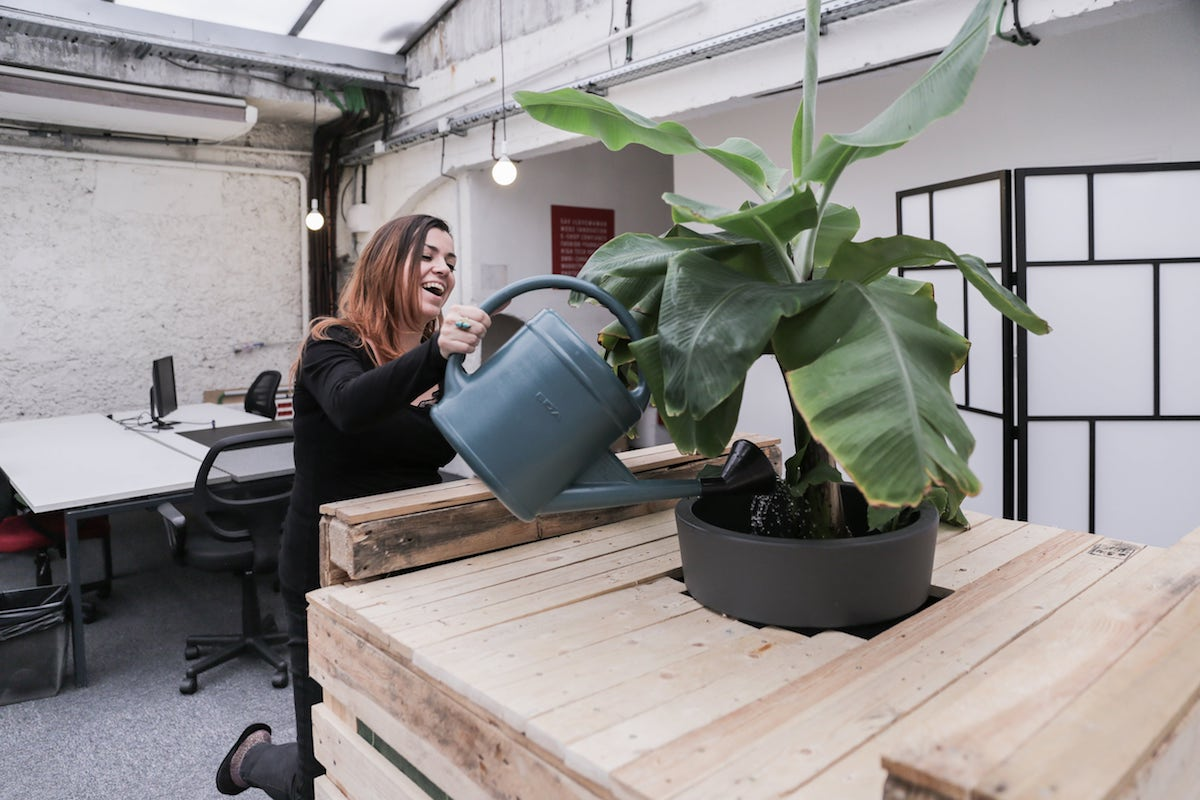 Wild Code School Paris - plants.jpg
